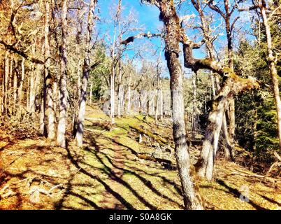 Forest trail on bright day - Stock Image
