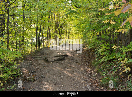 Forest path on the Bruce Trail near St. Catharines, Ontario, Canada.  Deciduous trees. - Stock Image