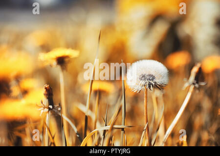 Autumn nature. Leaves and bushes with the yellow leaves in park in spring. Autumn leaves on branches in fall. - Stock Image