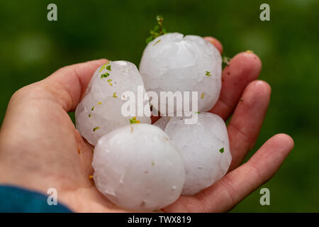Huge hailstones after a severe thunderstorm in the hand of a young woman - Stock Image