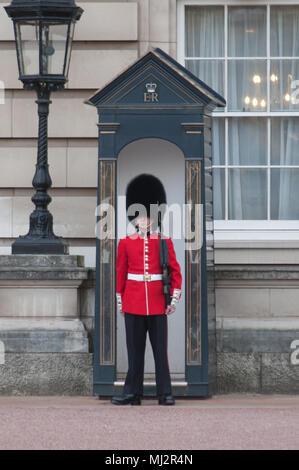 Guard at Buckingham Palace - Stock Image