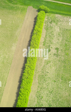Aerial view of a hedgerow separting two fields in a rural setting - Stock Image