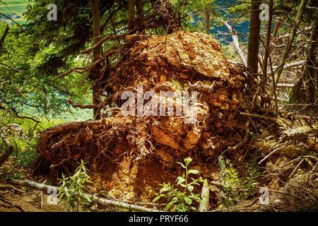 Fallen tree - Stock Image