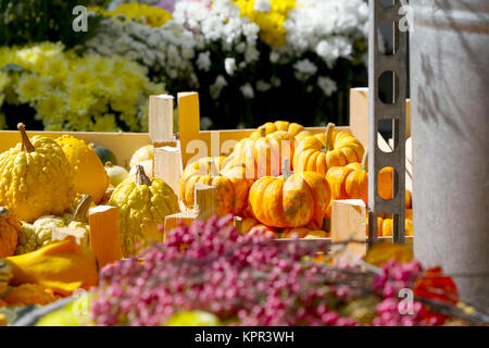 Autumn harvesting and among them mini pumpkins are presented on the outdoor market and are surrounded by other flowers, - Stock Image