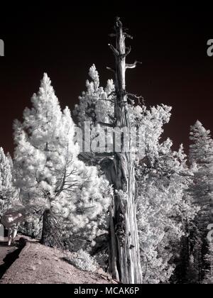 Yosemite National Park - Stock Image