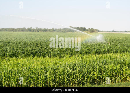Watering a crop of maize or sweet corn, in the Loire valley, Loiret, France, Europe - Stock Image