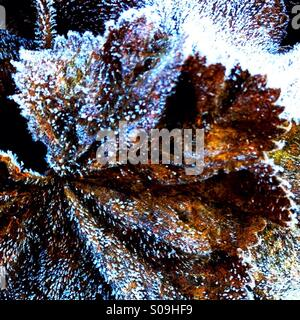 Frost on Leaf - Stock Image