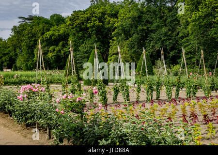 Plantation with Roses Chenonceau Castle Loire Valley France - Stock Image