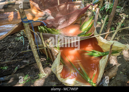 Extraction and preparation of sago, Mushu Island, Papua New Guinea - Stock Image