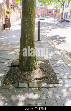 Damage caused by tree roots to pavement in urban environment. - Stock Image