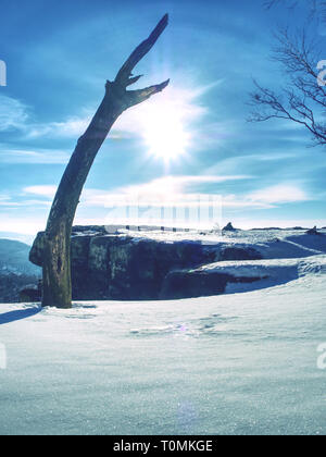 Bent alone tree in sowy winter landcape. Alone Tree in the snow in winter. Beautiful white winter - Stock Image