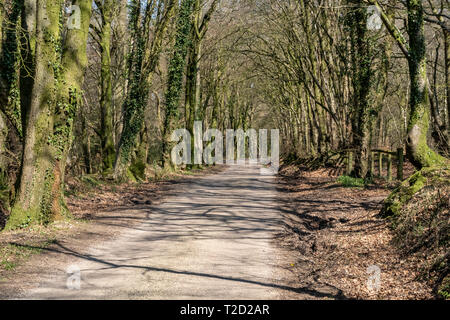 View along the East Hill Strips, near Ottery St Mary, Devon - Stock Image