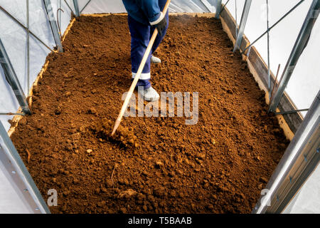 Man working in a real greenhouse. Lettuce and onion visible. Artistic selective focus. - Stock Image