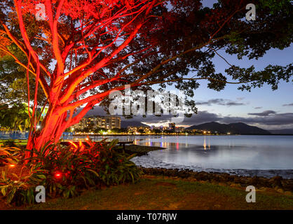 Red illuminated tree at nighttime in the city of Cairns, Far North Queensland, FNQ, QLD, Australia - Stock Image