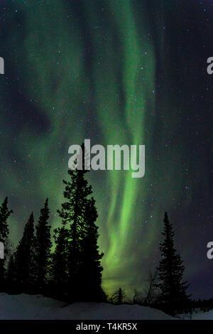 Northern light, Aurora borealis, colorful sky, Gällivare county, Swedish Lapland, Sweden - Stock Image