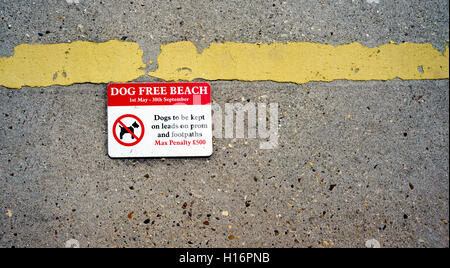 No Dogs on the beach sign showing a penalty for breaking the rules. - Stock Image