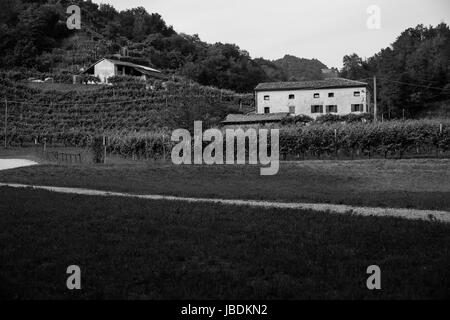 Houses in the middle of grape fields - Stock Image