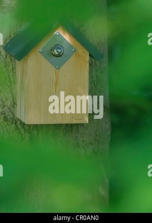 Blue tit (Parus caeruleus) adult emerging from nest box. Bedfordshire, England. May. - Stock Image