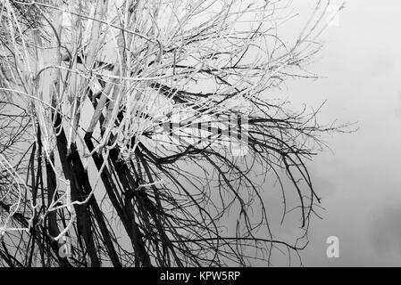 Branches of dead trees in a calm water filled pond with reflections and mirror imagery - Stock Image