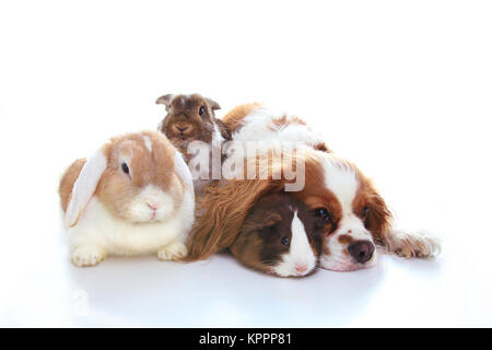 Animal friends. True pet friends. Dog rabbit bunny lop animals together on isolated white studio background. Pets - Stock Image