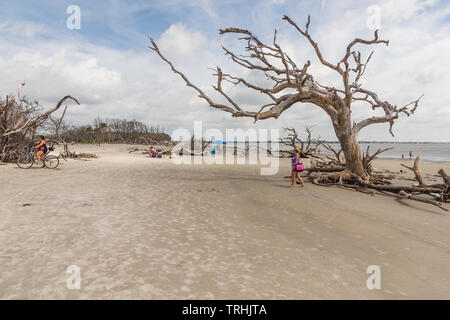 Beach goers on Jekyll Island Driftwood Beach Brunswick, Georgia USA - Stock Image