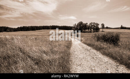 Dirt road and group of broadleaf trees in rural landscape. Natural scene. Off-road path under summer sky. Grass, meadow, field and forest. Brown tones. - Stock Image
