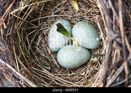 Bird's nest - Stock Image