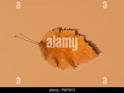 Beautiful Autumnal Background. Dry Orange yellow leaf with foggy edges on beige brown solid background. Back to School Thanksgiving Concept. Clean Min - Stock Image