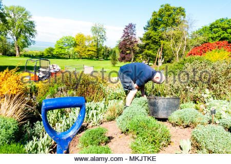 A gardener at Ness Gardens tending to the plants and gardens at the  Landscapes gardens at The University of Liverpool's Ness Botanical  Gardens, Ness Gardens, Ness, Wirral, Merseyside England UK Credit: Christopher Canty Photography/Alamy Live News - Stock Image