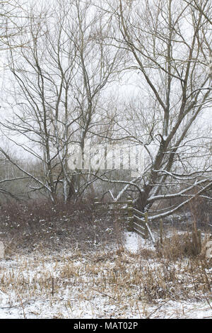 scrub woodland after snowfall on a grey winter day in Attenborough Nature Reserve, Nottinghamshire - Stock Image
