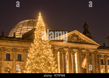 Christmas tree in front of Reichstag, Berlin - Stock Image