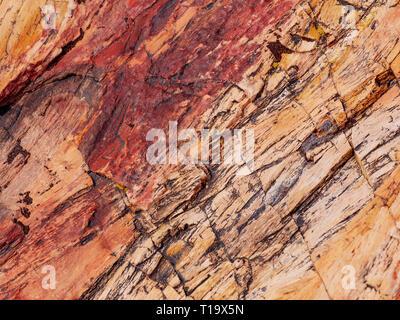 Detail of petrified log. Petrified Forest National Park, Arizona. - Stock Image