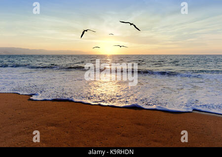 Ocean sunset birds is an ocean sunset with a a flock of bird silhouettes flying towrd the light of inspiration. - Stock Image