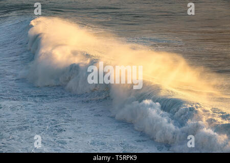 beautiful wave breaking with golden foam at the sunset - Stock Image