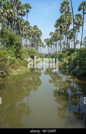 Palm tree back waters landscape in Goa, India. Goa is one of the most popular tourists destination in India and - Stock Image