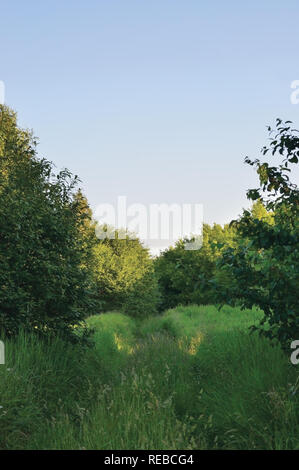 Deserted Abandoned Verdant Rural Woods Country Road Trail Perspective, Vehicle Tracks in Overgrown Wild Grass And Trees Village Tree Forest Impassable - Stock Image