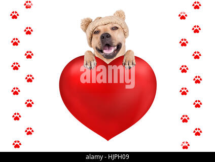 lovely cute dog with knitted hat hanging with paws on big valentine's day heart, isolated on white background - Stock Image