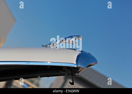1959 Jaguar Mark VIII hood ornament. - Stock Image