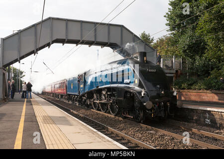 Ex LNER A4 steam locomotive 60007 Sir Nigel Gresley passes Chester le Street station on the east coast main line, north east England, UK - Stock Image