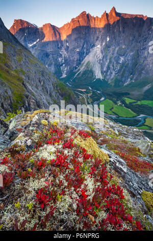 Autumn morning in Romsdalen valley, Møre og Romsdal, Norway. The red plant is Mountain Avens, Dryas octopetala. - Stock Image
