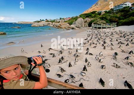 SA simon s town boulders beach jackass penguin colony little girl with binoculars - Stock Image