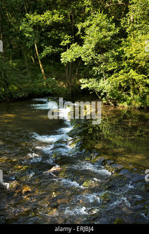 UK, England, Derbyshire, Dovedale, River Dove flowing over weir - Stock Image