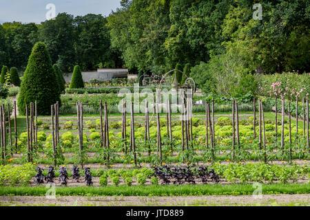 Plantation Farm Chenonceau Castle Loire Valley France - Stock Image