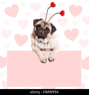 cute pug puppy dog with hearts diadem, hanging on blank pale pink promotional sign - Stock Image