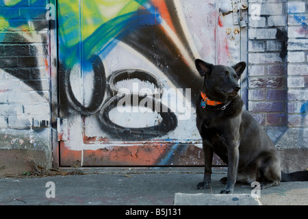 Dog in front of a vandalized brick pump house - Stock Image