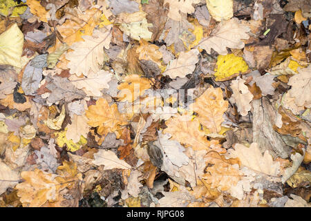 Multicoloured dead and decaying leaves on ground. - Stock Image