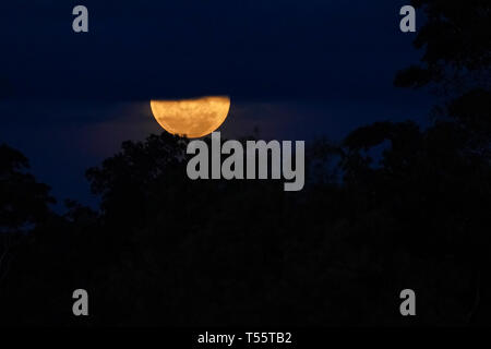 Super moon over the Amazon forest - Stock Image