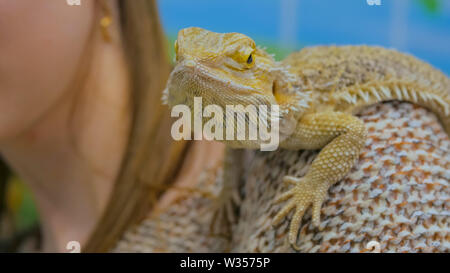Iguana sitting on woman shoulder - Stock Image