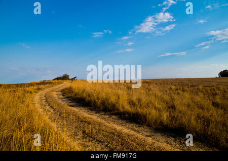 Meadow with road, yellow dry grass and blue sky. - Stock Image