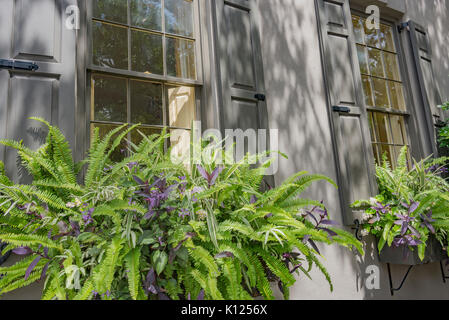 America, South Carolina, Charleston, window box full of ferns on a historic downtown house - Stock Image